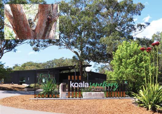 Koala Sanctuary web